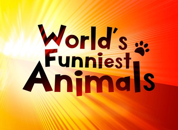 Photo of World's Funniest Animals CW Release Date/Time, World's Funniest Animals Voice Cast
